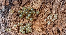 Rubber Beads (gumi gyöngy-4-es)