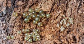 Rubber Beads (gumi gyöngy-8-as)